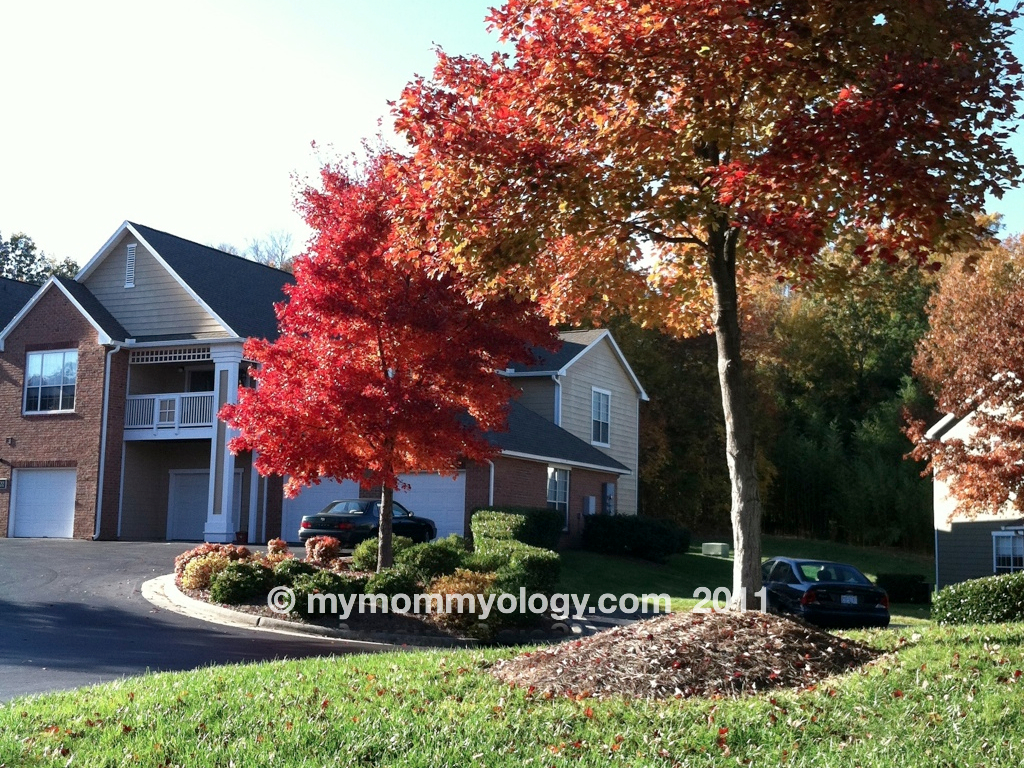My Mommyology Fall Trees